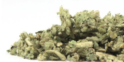 TKE Health - Natural Herbal Teas - Mullien Leaf